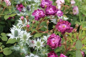Róże z mikołajkiem, fot. Danuta Młoźniak