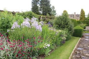 Dobre jakościowo rośliny o pięknym kolorze lub imponującej wysokości są bardziej cenione niż konkretne schematy kolorystyczne