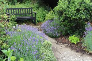 Ten obszar na początku istnienia ogrodu był obsadzony lawendą i różami w rabatach podzielonych kamiennymi ścieżkami