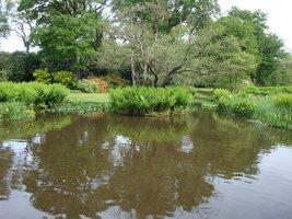 Ten dekoracyjny ogród łączy gatunki egzotyczne i europejskie