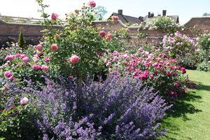 Należy unikać stosowania najbardziej inwazyjnych bylin lub krzewów, ponieważ mogą zdominować róże