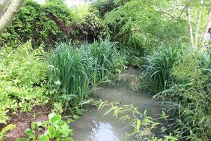 Ogród jest narażony na wylewy wody ze strumienia, ale odpowiednio dobrane rośliny co roku dzielnie to znoszą