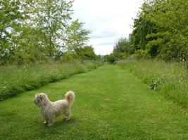 Jeśli kochamy swoje psy, zadbajmy o ich wyprowadzanie na spacer i odpowiednie miejsce dla nich, fot. Hanna Szczęsna