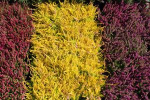 Zestawiamy plamy roślin na zasadzie kontrastu, fot. Danuta Młoźniak