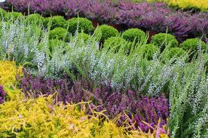 Wspaniałe okazy - tylko kupować i sadzić, fot. Danuta Młoźniak