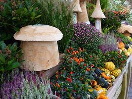 Te rośliny możemy dodawać do wrzosów: skimia, golteria, rozplenica, papryczki, a nawet ozdobne dynie