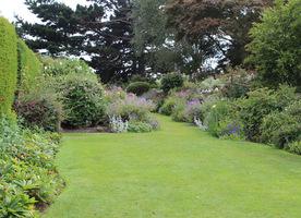 Trawniki w ogrodzie naturalnym powinny być zdrowe i nawodnione, wtedy konkurują z chwastami takimi jak jaskier, mniszek czy koniczyna