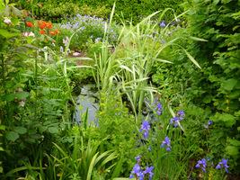 Ogród naturalny zachęca ptaki, pszczoły i motyle – żaby, ropuchy i jaszczurki do bycia w przyjaznym środowisku