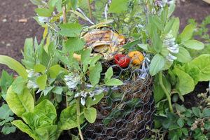 Tworzenie zdrowej gleby przy pomocy kompostu to sekret udanego ogrodnictwa, zwłaszcza naturalnego