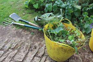 Na kompost wyrzucamy wszystko, co zbierzemy podczas pielenia rabat, oprócz korzeni chwastów wieloletnich i chorych części roślin