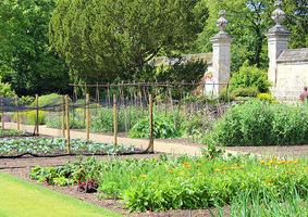 Uprawia się tu warzywa, zioła i kwiaty