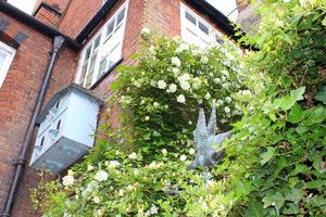 Wszechobecne róże sięgały pierwszego piętra a miejscami nawet dachu
