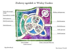 Plan ogródka ziołowego