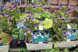 Moją uwagę zwróciły zestawy dzikich kwiatów posadzone w specjalnych skrzyneczkach