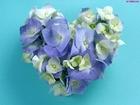 Kwiatki hortensja serce