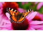 181069 piekny motyl rozowy kwiat
