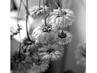 Kwiatki1